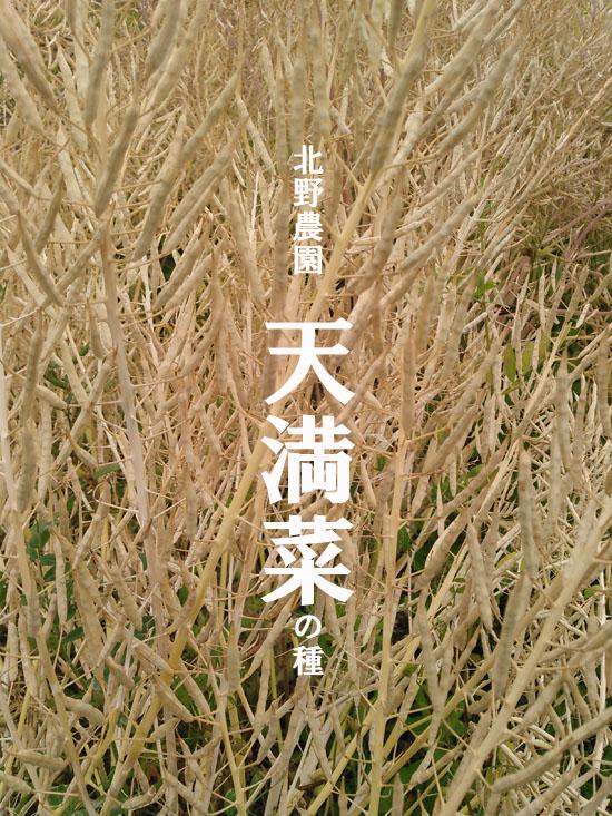 大阪天満菜jpg