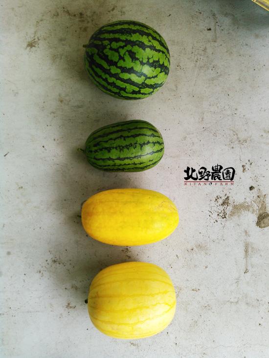 KIMG3499