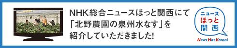 NHK総合 ニュースほっと関西
