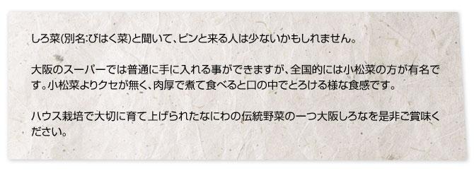 しろ菜(別名:びはく菜)と聞いて、ピンと来る人は少ないかもしれません。大阪のスーパーでは普通に手に入れる事ができますが、全国的には小松菜の方が有名です。小松菜よりクセが無く、肉厚で煮て食べると口の中でとろける様な食感です。ハウス栽培で大切に育て上げられたなにわの伝統野菜の一つ大阪しろなを是非ご賞味ください