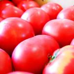 早生玉ねぎとフレッシュトマトの冷製パスタ写真C