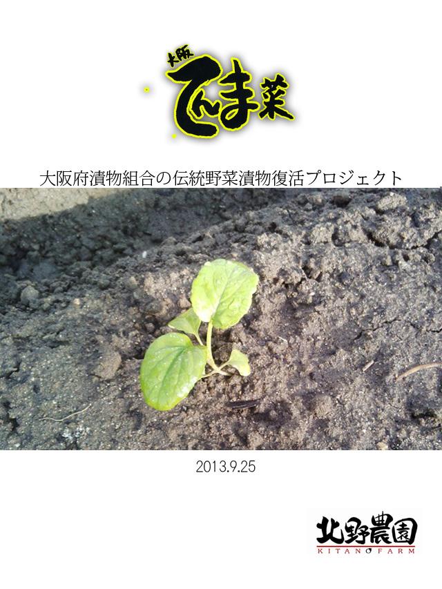 大阪天満菜