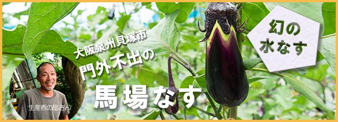 泉州貝塚、門外不出の幻の水茄子、馬場なす!